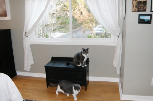 Cats at the Window 2